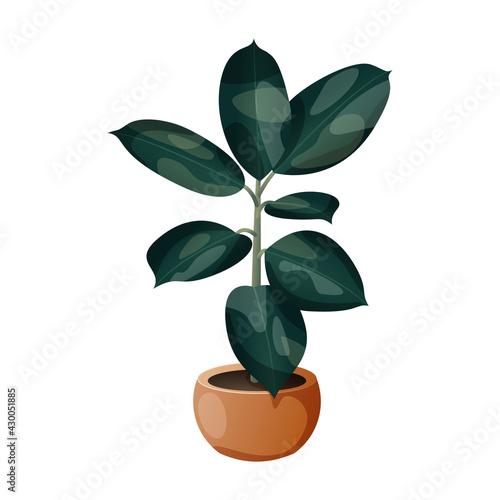 Fikus - egzotyczne zielone liście w pomarańczowej doniczce. Botaniczna ilustracja tropikalnej rośliny na białym tle. - fototapety na wymiar