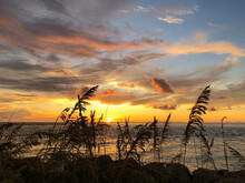 Captiva Sunset Through Sea Oats By H.Owen