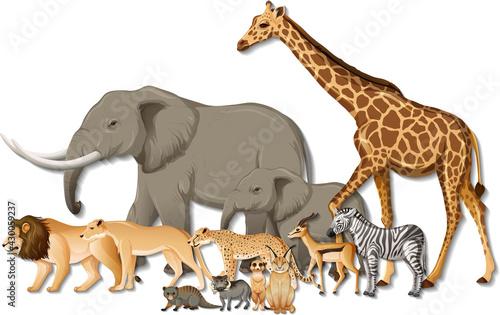 Fototapeta Group of wild African animals on white background obraz