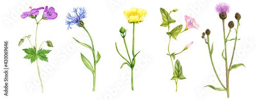 Fotografía watercolor drawing set of wild flowers
