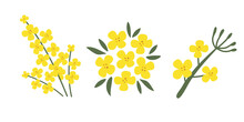 A Collection Of Rapeseed Flowers On A White Isolated Background. Yellow Hand-drawn Bright Plants. Blooming Design Elements For Postcards, Banners. Vector Illustration.