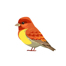 The House Finch Is A Bird In The Finch Family Fringillidae. Cartoon Flat Beautiful Character Of Ornithology, Vector Illustration Isolated On White Background. Tiny Sparrow Songbird