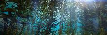 Kelp Forest, Giant Brown Algae Seaweed