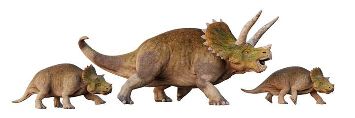Triceratops horridus, dinosaur with babies, set of isolated on white background