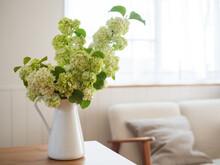部屋に飾ったビバーナム・スノーボールの花