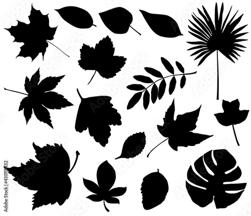 Fotografie, Obraz Collection of silhouettes of different species of foliage