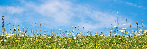 Fotografia Wildflowers in a meadow and blue sky. Panoramic summer background