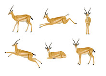 Set Of Antelopes On A White Background. A Collection Of Animals In Different Poses. Gazelle