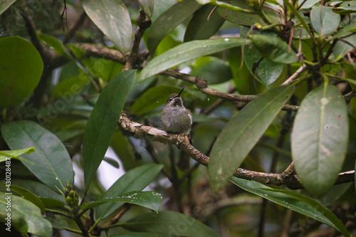 Fototapeta premium a single hummingbird sitting alone on a branch
