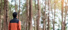 Happy Traveler Man Standing And Looking Pine Tree Forest, Solo Tourist In Orange Sweater Traveling At Pang Oung, Mae Hong Son, Thailand. Travel, Trip And Vacation Concept