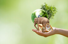 Earth Day Or World Animal Day Concept. Saving Planet, Protect Wildlife Nature Reserve, Protection Of Endangered Species, Biological Diversity. Elephant, Tiger, Deer, Parrot And Tree With Globe In Hand
