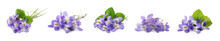 Set With Beautiful Wood Violets On White Background, Banner Design. Spring Flowers