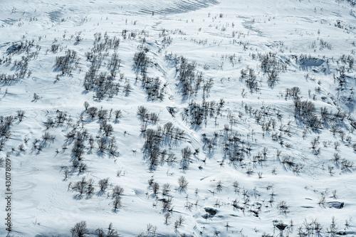 Fotografie, Obraz Schneebedeckter Berghang mit kahlen Stauden, bei Realp, Kanton Uri, Schweiz