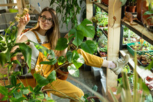 Florist Enjoy Plant Care. Young Female Gardener In Greenhouse, Flower Shop Or Home Garden With Flowerpots Of Green Houseplants On Wooden Racks. Gardening Hobby Or Growing Plants For Freelance Business