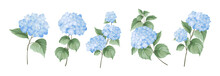 Set Of Differents Hydrangea Branches On White Background.