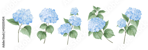 Fotografia Set of differents hydrangea branches on white background.
