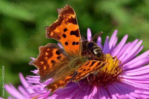 Obraz motyl i pszczoła - fototapety do salonu