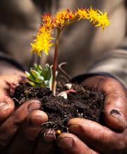 Mani Che Tengono La Terra Con Fiore