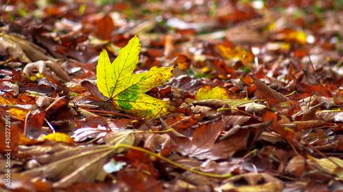 Jesienny żółty liść - fototapety na wymiar