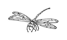 Decorative Dragonfly, Invertebrate Insect, Funny Character, Vector Illustration With Black Ink Contour Lines Isolated On A White Background In Hand Drawn Style
