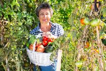 Smiling Aged Female Gardener Holding Fresh Greens And Vegetables Grown In Her Home Garden