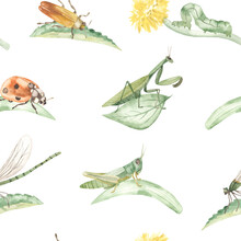 Watercolor Seamless Pattern With Insects, Praying Mantis, Grasshopper, Beetle, Ladybug, Dragonfly On Leaves And Blades Of Grass On A White Background