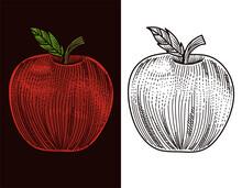 Illustration Vector Engraving Red Apple