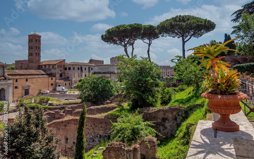 Obraz na plátně Rome Italy, picturesque view of the Roman forum with three of the famous pine tr