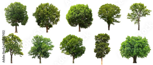 Foto tree collectoin isolate on white background