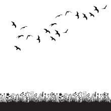 Isolated, Black Silhouette Flying Flock Of Birds