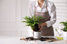 Woman Planting Fern At White Table Indoors, Closeup