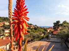 Aloe Plant With Red Flower And Italian Landscape With Hill View Mediterranean Sea, Nature, Houses And Clouds On Sea In Sunny Day Background