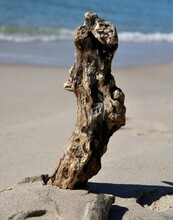 Brown Driftwood Log Standing Upright In The Sand
