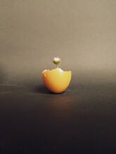 Creative Shot Of A Flower Growing In An Eggshell Isolated On Gray Background