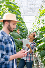 African American Woman With Digital Tablet Checking Plants Near Farmer With Smartphone On Blurred Foreground