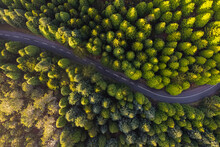 Aerial View Of The Road In The Forest With Green Pine Trees, Chão Das Feiteiras, Madeira Island, Portugal.
