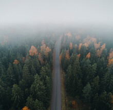 Aerial View Of The Road In Colorful And Misty Autumn Forest, Vormsi Island, Estonia.