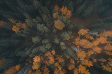 Aerial View Of The Misty And Colorful Forest In Autumn, Vormsi Island, Estonia.