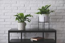 Beautiful Fresh Potted Ferns On Black Table Near White Brick Wall