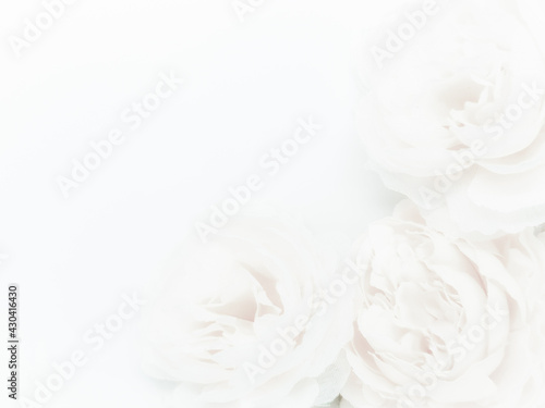 Fotografija Beautiful abstract color white flowers on white background, black leaves texture