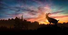 Ibex Male Silhouette