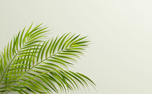 Green Leaf Of Palm Tree On Gray Background