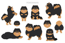 Pomeranian German Spitz Clipart. Different Poses, Coat Colors Set.