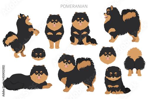Obraz Pomeranian German spitz clipart. Different poses, coat colors set. - fototapety do salonu
