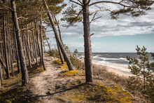 Typical Baltic Sea Coastline Landscape In Lithuania. Pine Forest  And Sandy Beach With Blue Sky On Sunny Day.