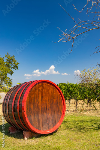 Fototapeta premium Wine barrel in vineyard, Tuscany, Italy