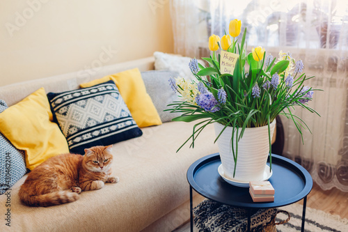 Obraz Mother's day present. Pot with blooming spring yellow flowers and greeting card waits for mom at home - fototapety do salonu