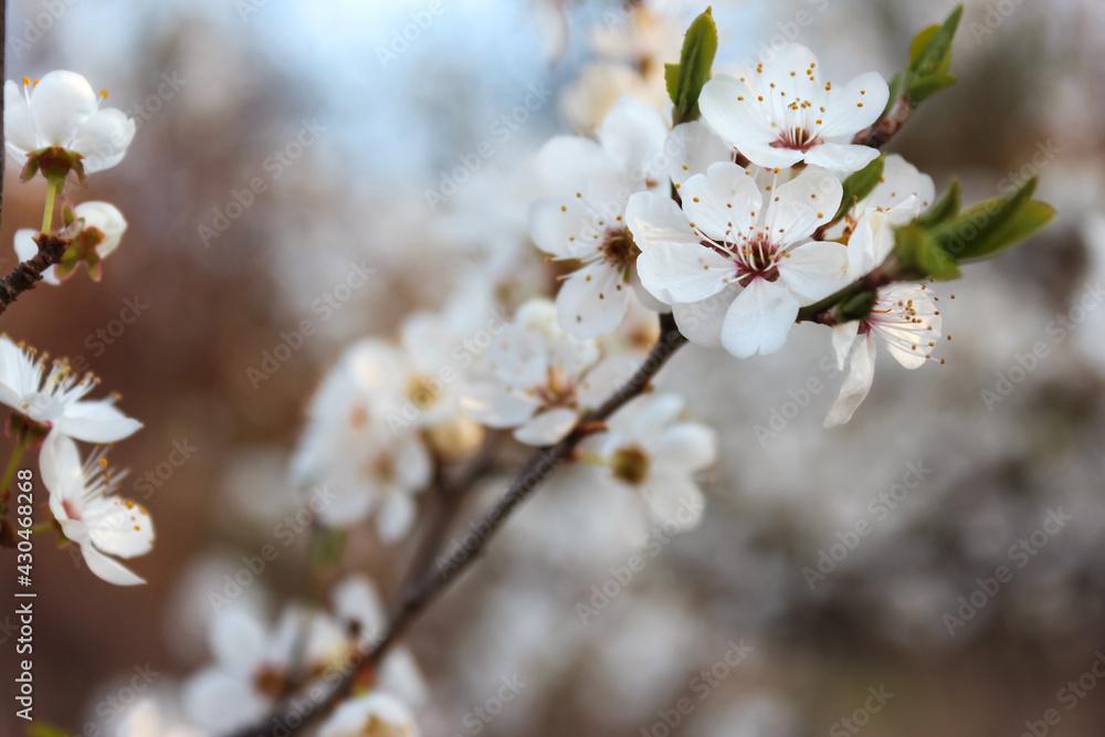 Fototapeta Sezon wiosenny