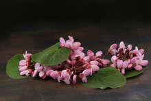 Redbud Tree Green Leaves And Flowers (Cercis Siliquastrum) On Wooden Table