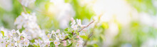 Beautiful Panoramic Scenery With Spring Flowers, Green Leaves And Bokeh Background